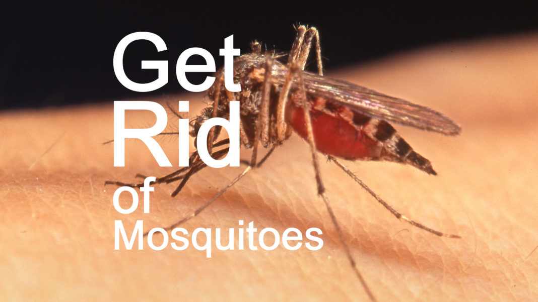 1 Pesky Mosquito Is All It Requires To Make You And Also Or Your Priceless  Youngster Loss Unwell From Mosquito Birthed Illness Like Dengue Fever, ...